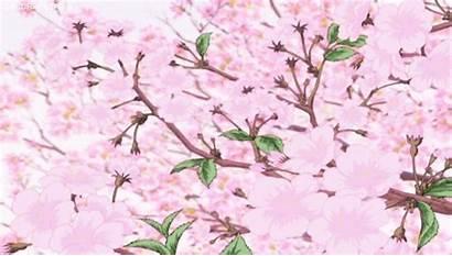 Cherry Blossoms Anime Kawaii Background Gifs Flowers