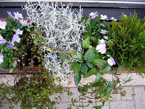 bloembakken opvullen met winterharde planten tuin