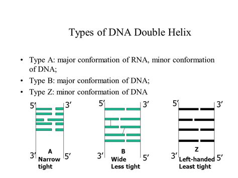 Chapter 7 Structure Of Nucleic Acids