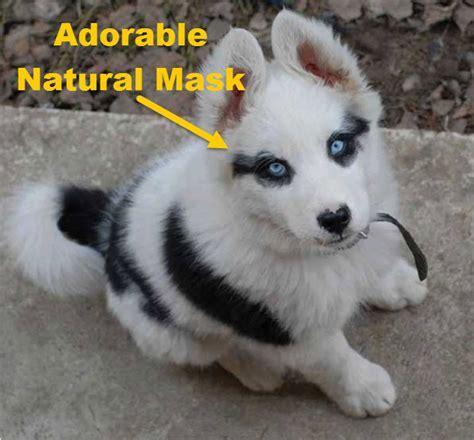 dogs    unique  amazing coats   world
