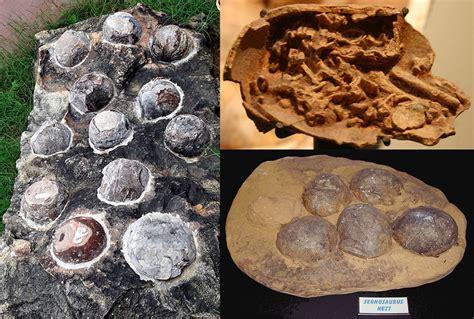 Dinosaur Eggs Fossils