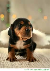 Cute Puppies Brown and Black