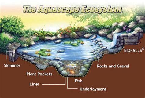 Aquascape Ecosystem by Pond Builders Llc The Aquascape Ecosystem