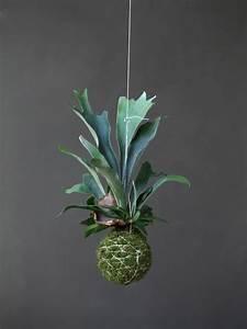 Art Floral Japonais Kokedama Ides De Pots De Plante