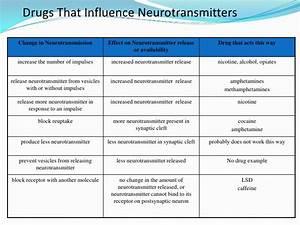 Brain and behaviour 2010