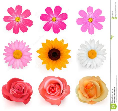 big colorful flowers big set of beautiful colorful flowers royalty free stock photo image 21560645