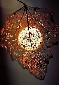 RESILIENCE | PhotoOfTheDay | Pinterest | Beautiful ...