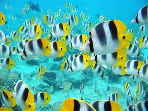 Colorful Fish Latest Free Images Photos HD Wallpapers Download