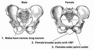 Nh  Identifying Bones  3