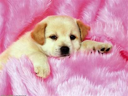 Computer Wallpapers Puppies