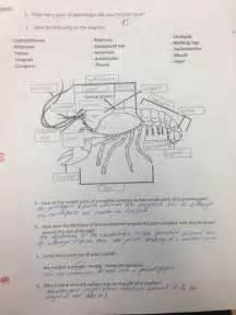 Arthropoda  Grasshopper And Crayfish  Daphnia