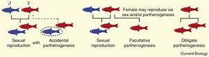 Parthenogenesis  Birth Of A New Lineage Or Reproductive