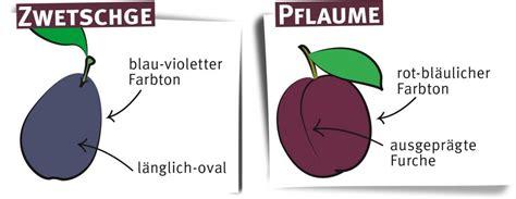 pflaumen zwetschgen unterschied unterschied zwischen pflaumen und zwetschgen edeka kempken
