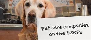 pet care companies on the serps click consult With dog care companies