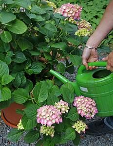 Sockel Für Regentonne Selber Bauen : regenwasser sammeln mein sch ner garten ~ Watch28wear.com Haus und Dekorationen