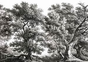 Papier Peint Arbre Noir Et Blanc : paysages gravures le vieux ch ne noir et blanc 450x300 5 l s de 90cm ultra mat ~ Nature-et-papiers.com Idées de Décoration
