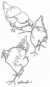 Drawing Chicken Line Drawings Ink Pen Continuous Sketches Contour Patrol Bug Chook Draw Debbie Chooks Pencil Animals Wire Simple Coloring sketch template