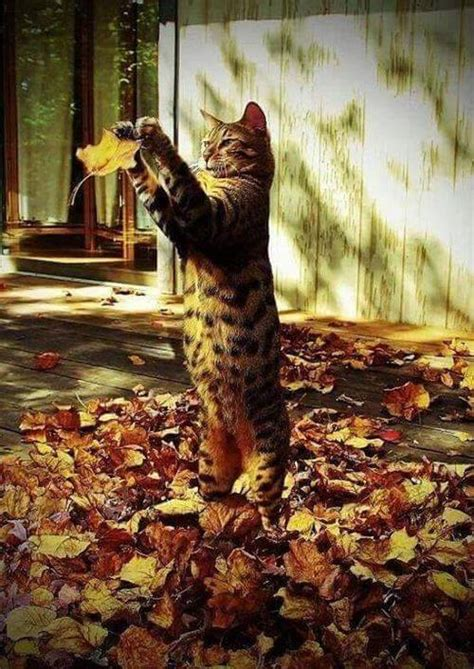 cats   ready  fall