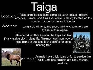 Life In The Taiga : what are biomes biomes are regions of the world with similar climate animals and plants ~ Frokenaadalensverden.com Haus und Dekorationen