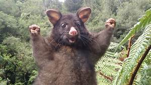 Don't stress: Positive possum is here to get you through ...