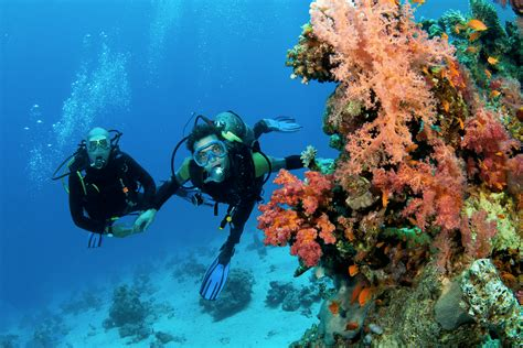 Ecotourism guidelines - Coral Reef - zanzibar.eco