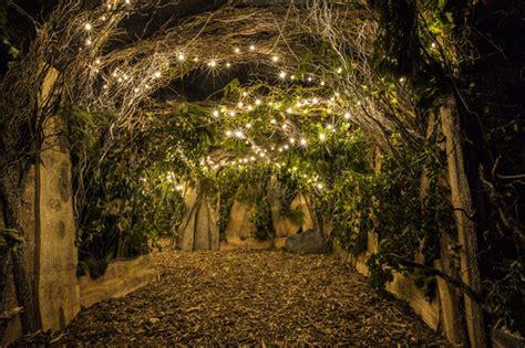 backyard cinemas enchanted forest showing frozen