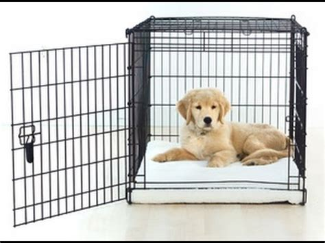 crate a puppy how to crate train a puppy youtube