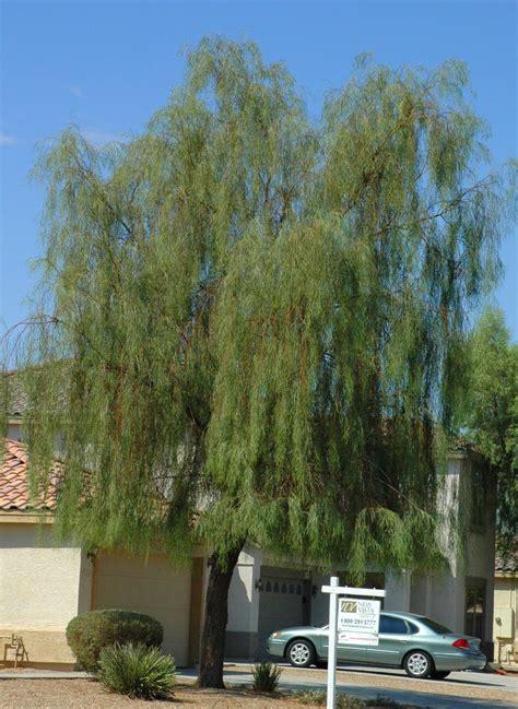 wonderful dilemmapart  ramblings   desert garden