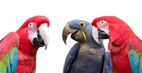 talking birds weneedfun
