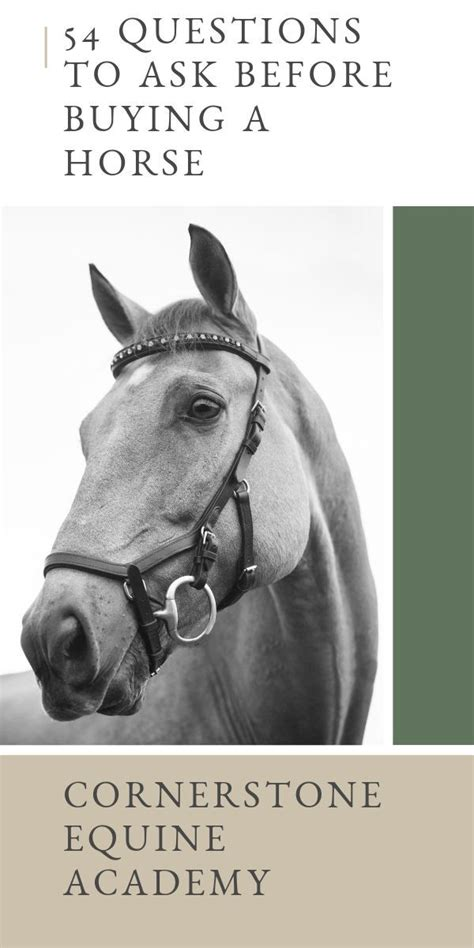 horse questions ask academy buying riding