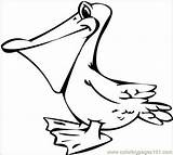 Pelican Coloring Pages Bird Drawing Drawings Pelicans Sketch Colouring Cartoon Patterns Crafts Svg Coloringpages101 Google Animals Template Pirate Wild Seagulls sketch template