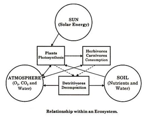 ecosystems concept structure  functions  ecosystems