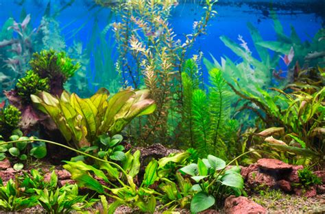 water plants for aquarium what s wrong with my aquarium plants