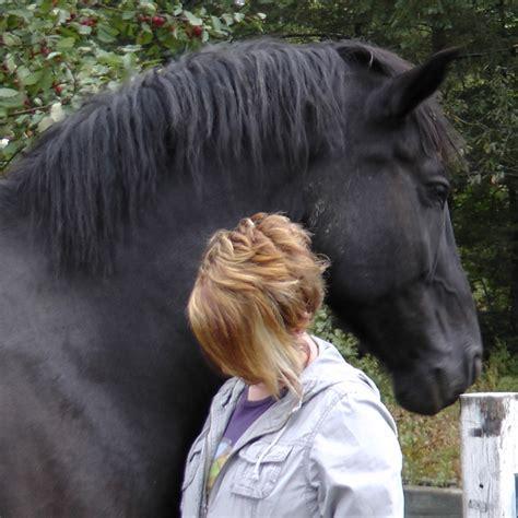 human horse interaction