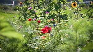 Blumen Im Sommer : blumen sommer holland bild 100 von 101 ~ Whattoseeinmadrid.com Haus und Dekorationen