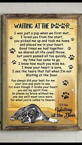 Pin by Shane De... Shane Dog Quotes