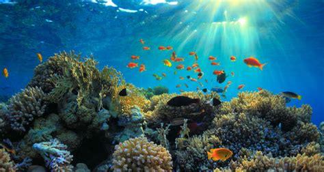 visit  sanctuary noaa national marine sanctuaries
