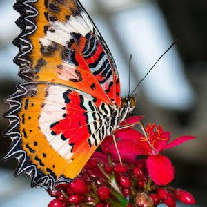 85876 Westminster Butterfly Pavilion Coupon by Colorado Vacations Save At Things To Do At Family And