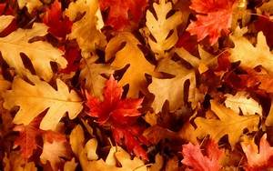 Fall Leaves Backgrounds - Wallpaper Cave