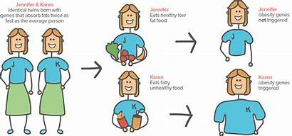 Environment Heredity Examples Epigenetics Study Genes Personality
