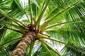 Winterharte Palmen Für Den Garten  Palmenarten & Pflege