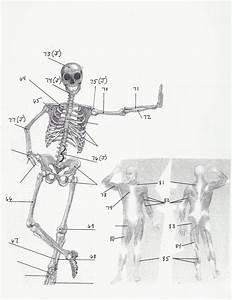 Lesson 4  Skeletal System