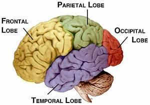 Emotion On The Brain
