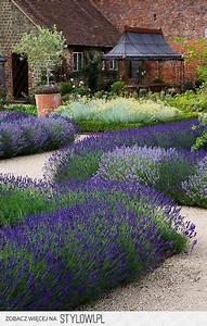 Rosen Und Lavendel : lavendel auf kiesbeeten toll f r sonnige vorg rten zusammen mit rosen und heiligenkraut ein ~ Yasmunasinghe.com Haus und Dekorationen