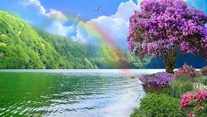 Rainbow Nature River Flowers