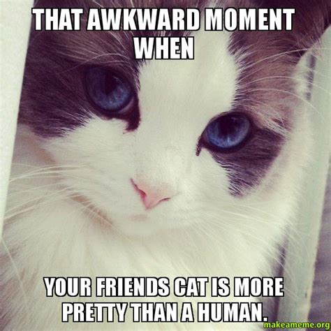 Awkward Cat Meme - that awkward moment when your friends cat is more pretty than a human ridiculously photogenic