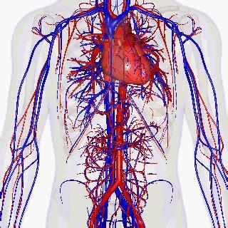 Vascular Disease Wikipedia