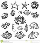 Shells Coloring Pages Beach sketch template