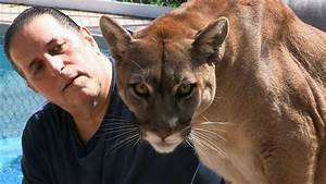 Cougar Man  Living With A Mountain Lion