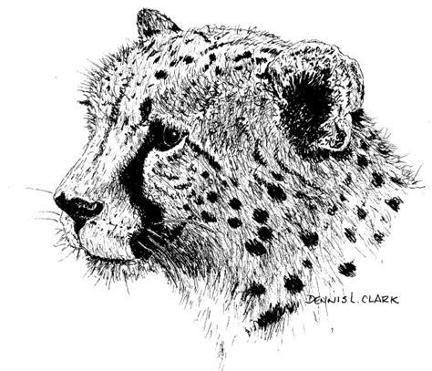 art class   draw  cheetah    ink